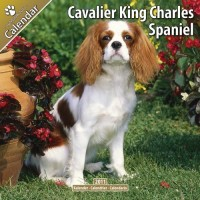 Cavalier King Charles 16 Mois 2011 Calendrier