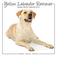 Calandrier 2012 - Yellow Labrador Retriever